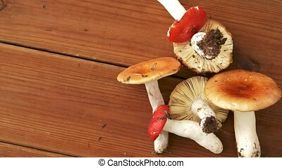 russule mushrooms on wooden background - edible mushrooms,...