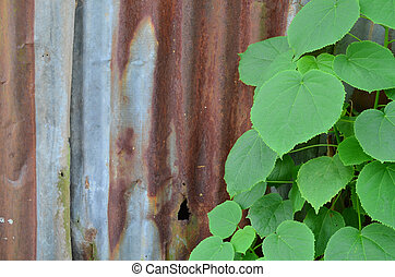 Rust Galvanize Sheet With Green Plant