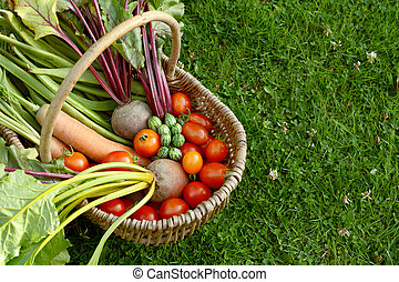 Rustic basket filled with fresh vegetables from an allotment