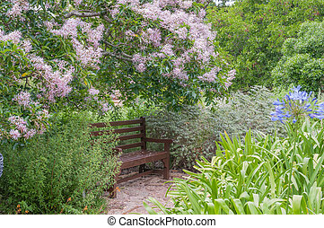 Rustic bench beneath a flowering Cape Chestnut tree