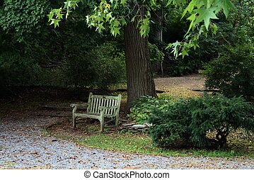 Rustic Old Bench in the woods - An old rustic bench sitting...