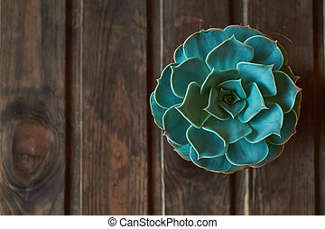 Rustic wooden background with awesome cactus succulent plant closeup. Flat lay with a space for text