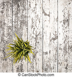 Rustic wooden table with a plant