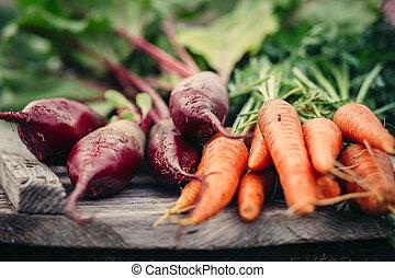rustiek, fris, carrots., oogsten