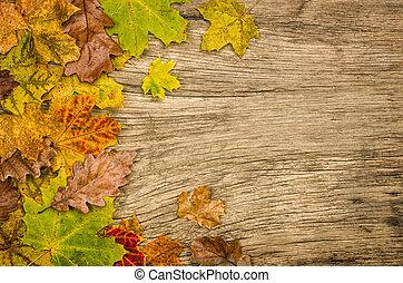 rustique, coloré, bois, feuilles, automne, fond