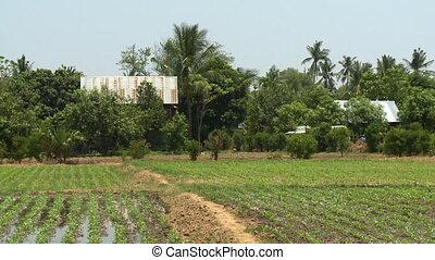rustique, maisons, cultivé, champ