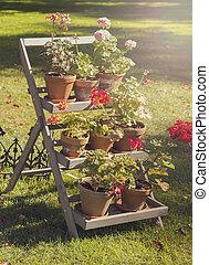 rustique, plante, stand
