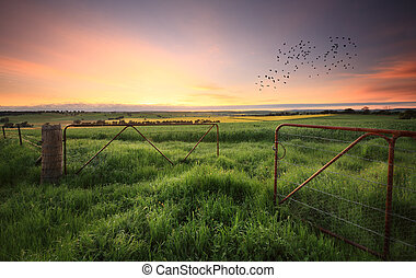 Rusty gates open to wheat and canola crops - Rusty gates...