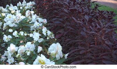 ruszać się w jedną i drugą stronę, kwiaty, flowerbed, wiatr