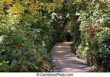 ruta de madera, bosque, por
