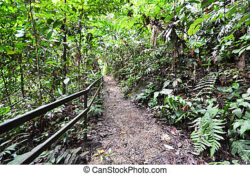 ruta de madera, kinabalu, montaña