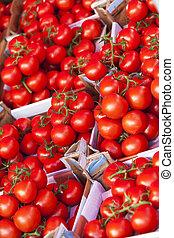 rutor, av, mogna tomater