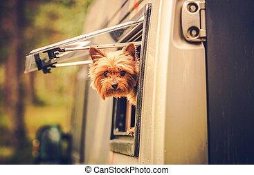 rv, viaggiare, cane