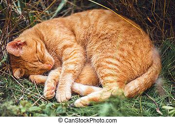 ryšavý vzrušit se, ona, kočka, skrytý, sloj, den, spací, květ, léto, -, zastínit