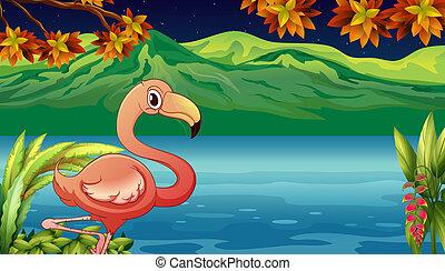 rybník, labuť