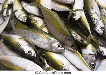 ryby, płetwa, żółty