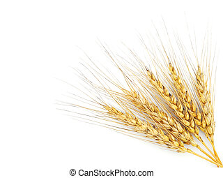 Rye ears isolated on white background