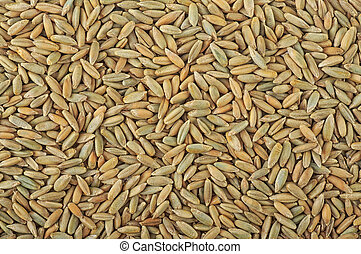 Rye grain as background texture, top view.