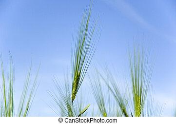 rye on the sky background