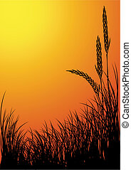 rye silhouette vector background - sunset