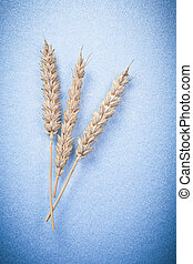 Rye wheat ears on blue background top view