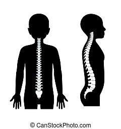 rygg, pojke, illustration, hälsosam, vektor