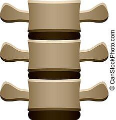 rygg, ryggkotor, främre del, mänsklig, synhåll
