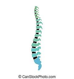 rygg, vektor, mänsklig, struktur