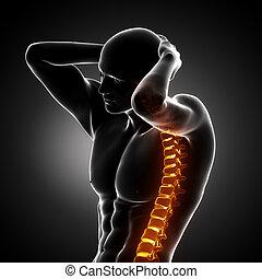 rygrad, begreb, menneske, x-ray