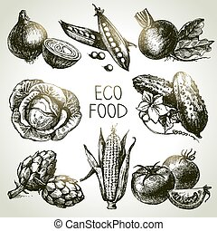 rys, eco, set., ilustracja, ręka, foods.vector, roślina,...