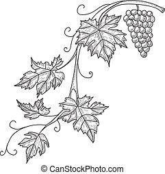 rys, gałąź, winorośl, odizolowany, ilustracja, ręka, wektor, tło, pociągnięty, grapes., biały