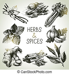 rys, ikony, ręka, zioła, pociągnięty, spices., kuchnia