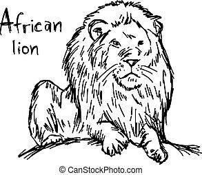 rys, -, odizolowany, ilustracja, ręka, kwestia, lew, wektor, czarne tło, afrykanin, pociągnięty, biały