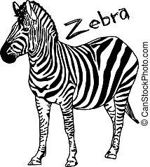 rys, -, odizolowany, ilustracja, ręka, kwestia, wektor, czarnoskóry, zebra, tło, pociągnięty, biały