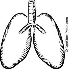 rys, tchawica, ludzki, płuca