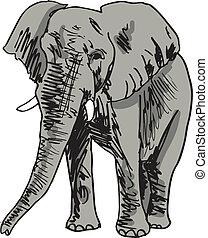 rys, wektor, elephant., ilustracja