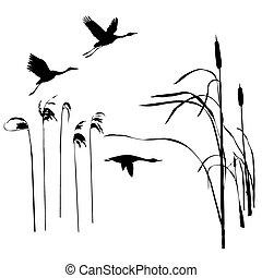 rysunek, przelotny, wektor, ptaszki