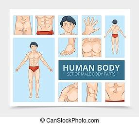 rysunek, strony, samiec, skład, ciało