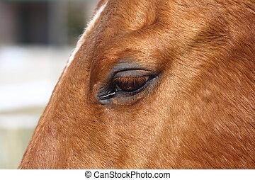 rysy, koń