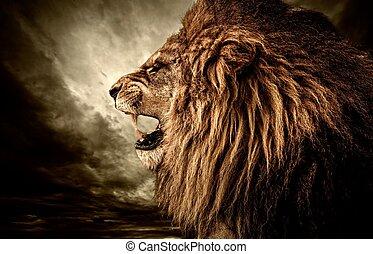rytande, lejon, mot, stormig himmel