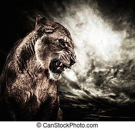 rytande, lejoninna, mot, stormig himmel