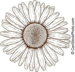 rytownictwo, chamomile, ilustracja
