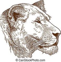 rytownictwo, głowa, ilustracja, lwica