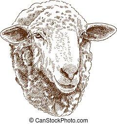 rytownictwo, głowa owcy, rysunek, ilustracja