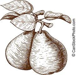rytownictwo, gruszka, i, liść