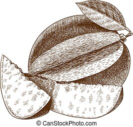rytownictwo, mangowiec, ilustracja