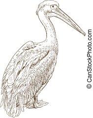 rytownictwo, pelikan, ilustracja