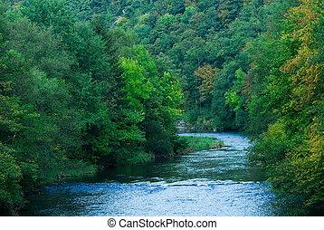 rzeka, las, zielony