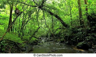 rzeka, soczysty, dżungla