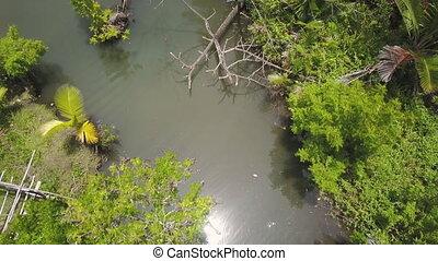 rzeka, strzał, dżungla, drzewa